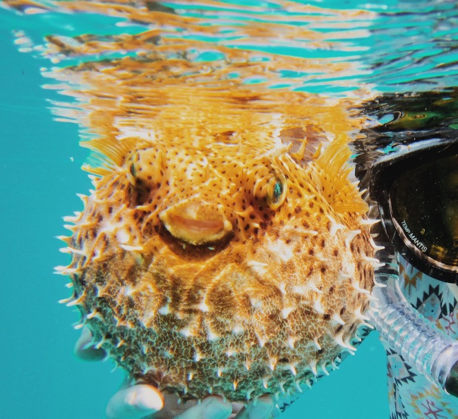 amy-humphries-puffer fish199907 (1)